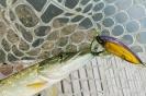 Рыбалка в Виннице